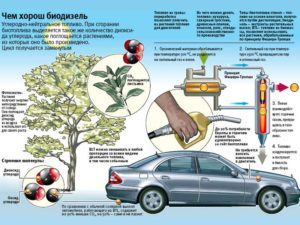 Биотопливо своими руками - оцениваем возможности производства!